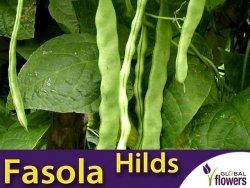 Fasola szparagowa tyczna Hilds Neckarkönigin (Phaseolus vulgaris) XXL 500g