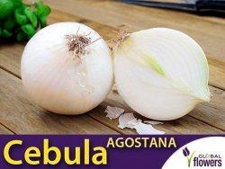 Cebula biała Agostana (Allium cepa) 5g