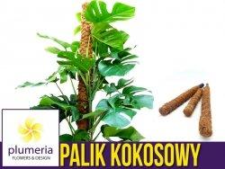 Palik kokosowy tyczka - podpora do roślin 100 cm x 25 mm - 1 szt.