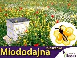 Kwietna łąka Mieszanka roślin miododajnych BEE'S UNIVERSE nasiona XXXL 1kg