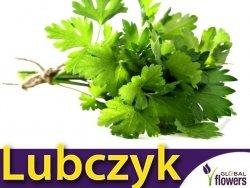 Lubczyk (Levisticum officinale) nasiona 1g