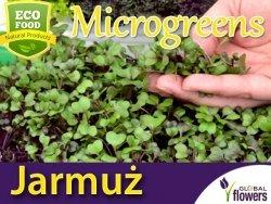 Microgreens - Jarmuż Scarlet śr.wys. czerwony, kędzierzawy 3g