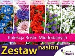 Kolekcja Roślin Miododajnych (zestaw 5 gatunków) nasiona