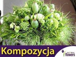 Kompozycja Zielonych Roślin Jednorocznych 1 g nasiona