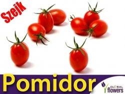 Pomidor SZEJK karłowy (Lycopersicon Esculentum) nasiona 0,5g