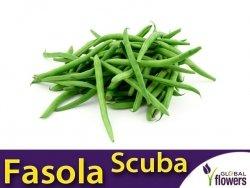 Fasola szparagowa karłowa zielonostrąkowa Scuba (Phaseolus vulgaris) 40+10g