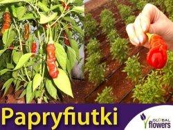 Ostra Papryka 'Papryfiutki' nasiona (Capsicum annuum)