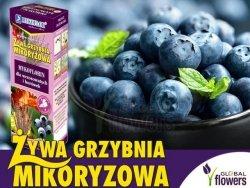 Mikoryza Grzybnia do Borówek i Wrzosowatych 250ml