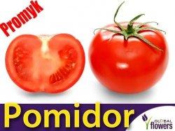 Pomidor gruntowy Promyk (Lycopersicon Esculentum) 0,5g