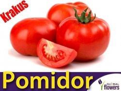 Pomidor gruntowy wysoki Krakus (Lycopersicon Esculentum) 0,5g