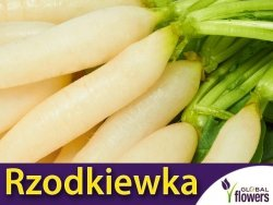 Rzodkiewka Sopel Lodu (Raphanus sativus) 10g