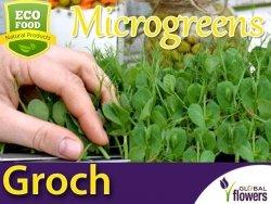 Microgreens Groch łuskowy Boogie 20g