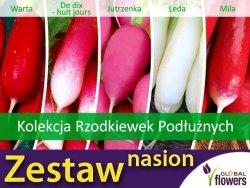Kolekcja Rzodkiewek Podłużnych (zestaw 5 odmian) nasiona