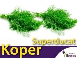 Koper ogrodowy Superducat (Anethum graveolens) XXL 500 g