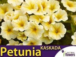 Petunia ogrodowa Kaskada żółta  (Petunia x hybrida pendula) 0,02g LUX