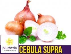 Cebula SUPRA (Allium cepa) nasiona XL 100g