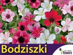 Bodziszki, mieszanka gatunków (Geranium sp)  0,15+0,05 nasiona
