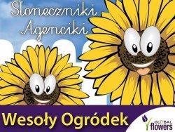Słonecznik ogrodowy jadalny - Słoneczniki Agenciki Wesoły ogródek