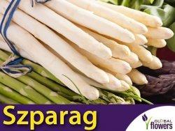 Szparag warzywny 'Argenteuil' ( Aspargatus officinalis) nasiona 1g