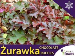 Żurawka 'Chocolate Ruffles' (Heuchera) Sadzonka