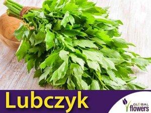 Lubczyk ogrodowy (Levisticum officinale) Sadzonka