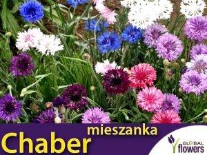 Chaber, mieszanka gatunków wieloletnich (Centaurea sp.) nasiona 0,5g