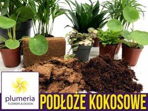 Podłoże kokosowe prasowane - substrat do roślin 650g/8 litrów