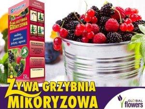 Mikoryza Grzybnia do krzewów owocowych 250ml