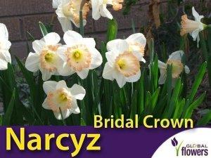 Narcyz trąbkowy 'Easter Bonnet' (Narcissus ) CEBULKI 4 szt.