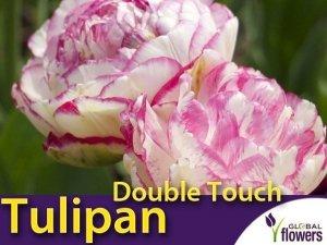 Tulipan Pełny 'Double Touch' (Tulipa) CEBULKI 4 szt