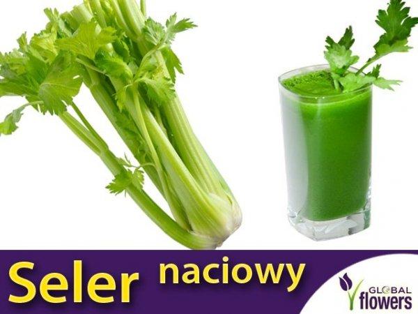 Seler naciowy Groene Pascal (Apium graveolens) 0,5 g