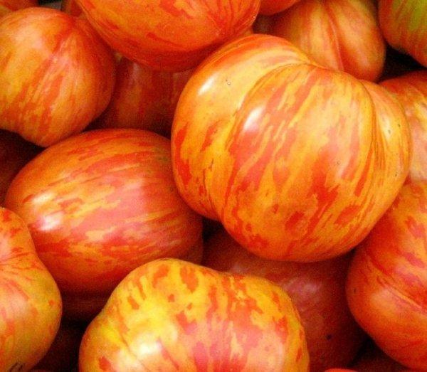 Pomidor w czerwono- pomarańczowe prążki