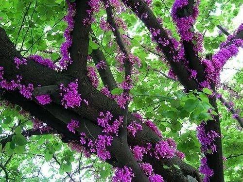 Kwiaty na korze