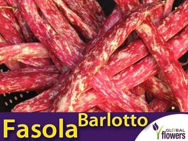 Fasola szparagowa karłowa dwubarwna Borlotto
