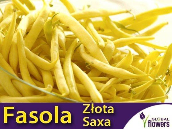 Fasola szparagowa karłowa żółtostrąkowa Złota Saxa
