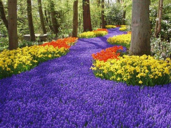 Cudowne pola niebieskich szafirków