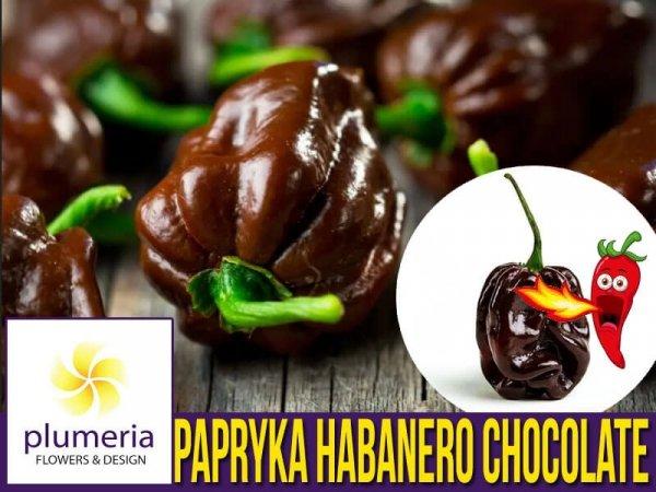 Papryka Chili HABANERO CHOCOLATE (Capsicum annuum) nasiona
