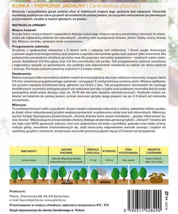 Mikoryza Grzybnia Pieprznik Jadalny Kurka (Cantharellus cibarius) XXL 100g