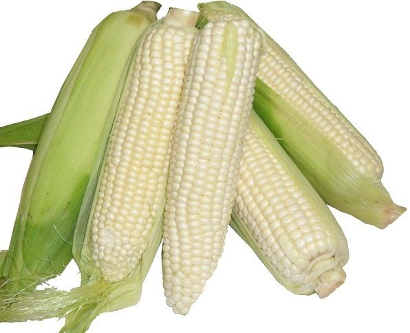 Kukurydza biała