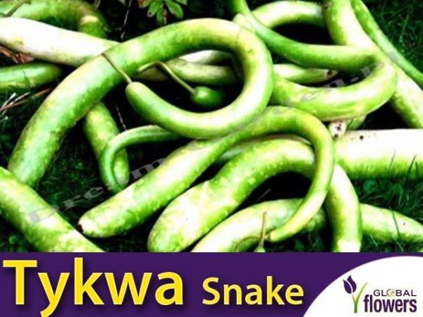 Tykwa Snake - wijące się węże (Lagenaria siceraria)