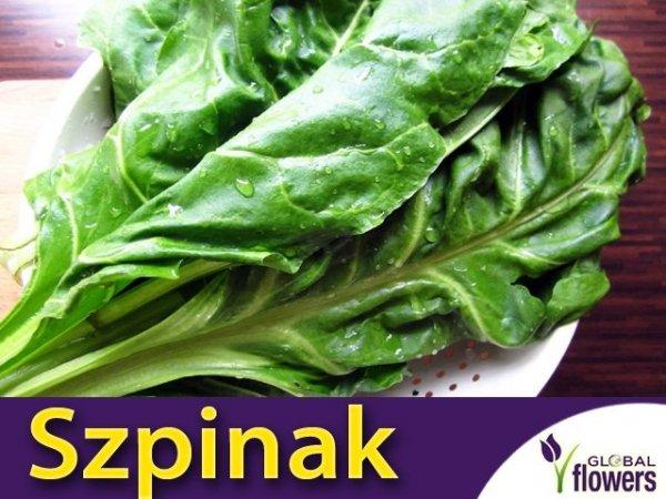 Szpinak Warzywny Olbrzym Zimowy (Spinacia oleracea) op. XXL 500 g