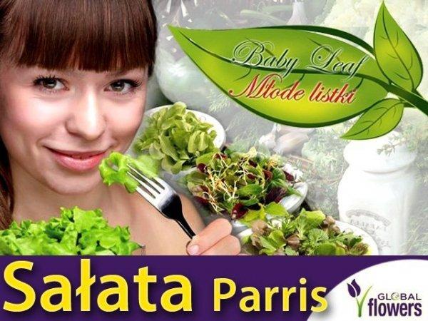 Baby Leaf Sałata rzymska Parris Island Cos (Lactuca sativa) 1,5