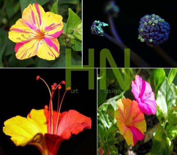 Kwiaty kwitnące w nocy
