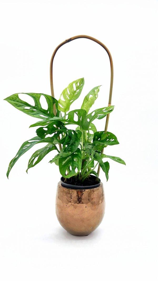 Podpora z bambusa