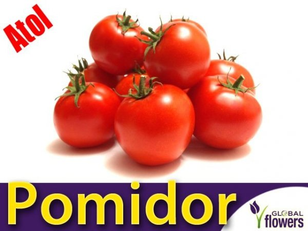 Pomidor gruntowy Atol (Lycopersicon Esculentum)