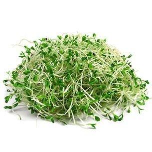 Nasiona na Kiełki - Brokuł