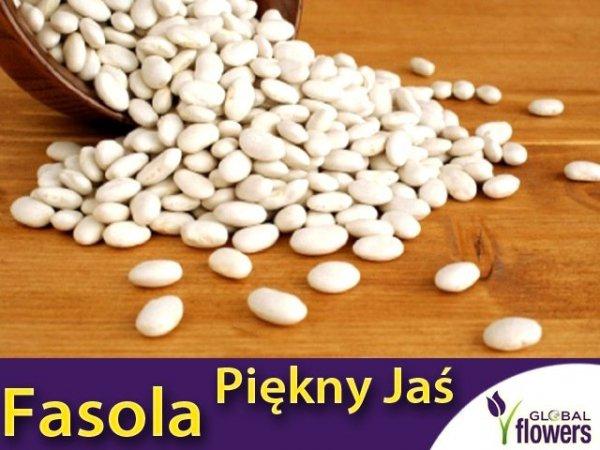 Fasola tyczna Piękny Jaś (Phaseolus coccineus)