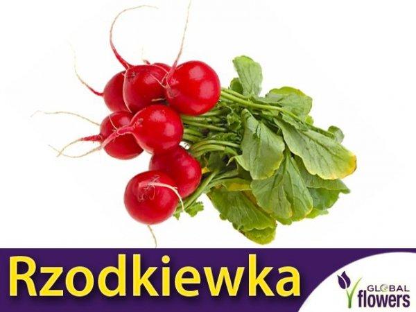 Rzodkiewka Saxa 2 o szklistym miąższu