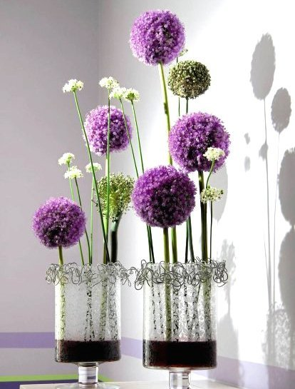 Piękne fioletowe kule czosnku