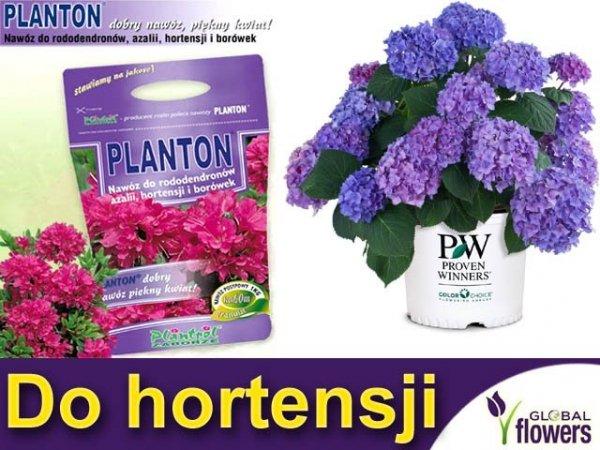 PLANTON® do rododendronów, azalii, hortensji i borówek 1kg